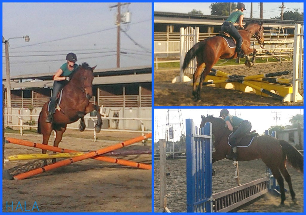 Horses: Moby learning to jump