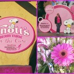 Knott's Berry Farm For the Cure
