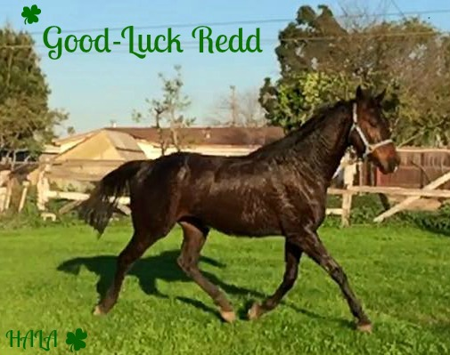 Good-Luck-Redd-Lucky