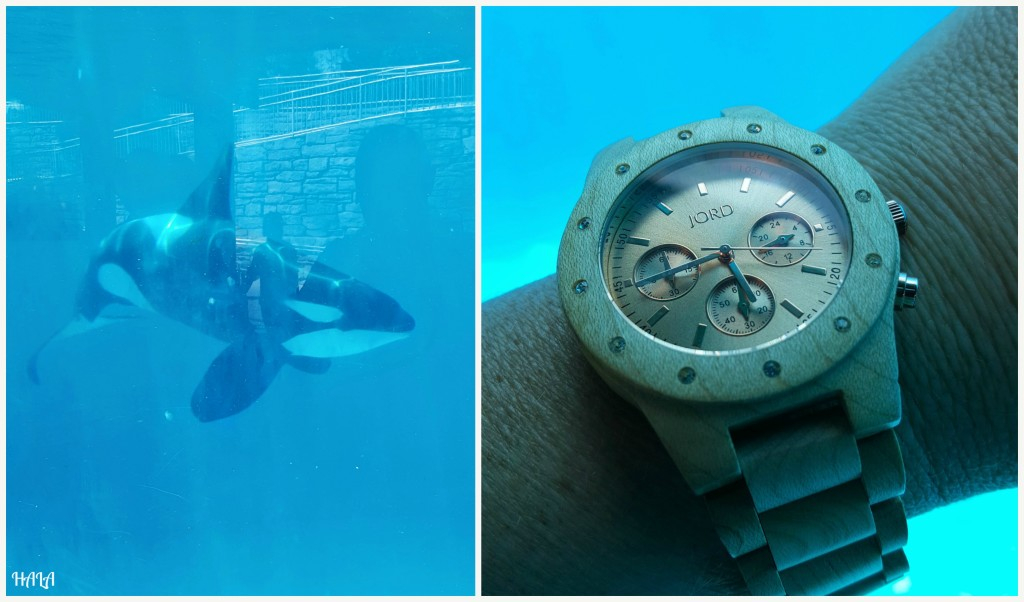 Jord-Watches-SeaWorld