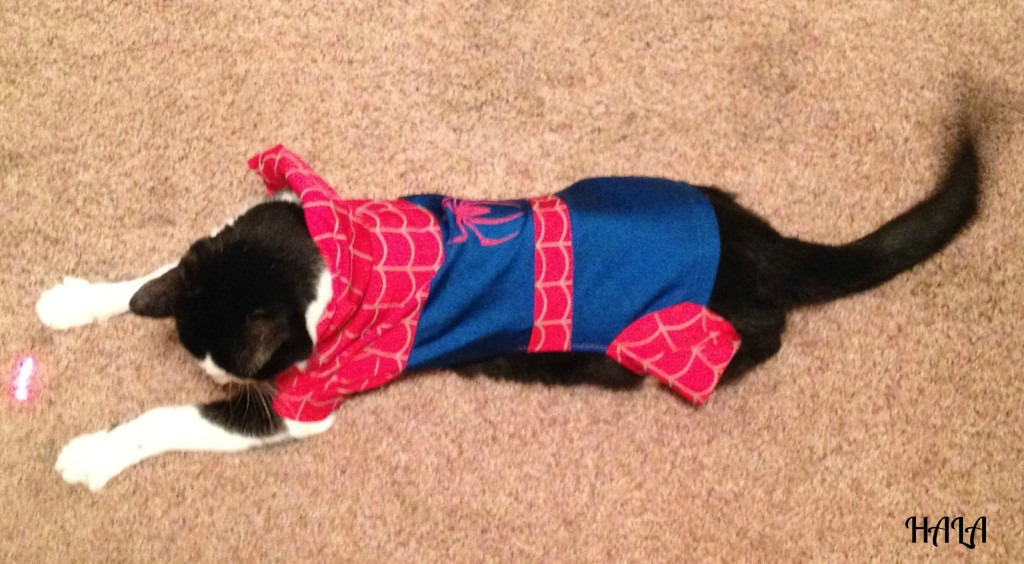 Spider Cat in Action