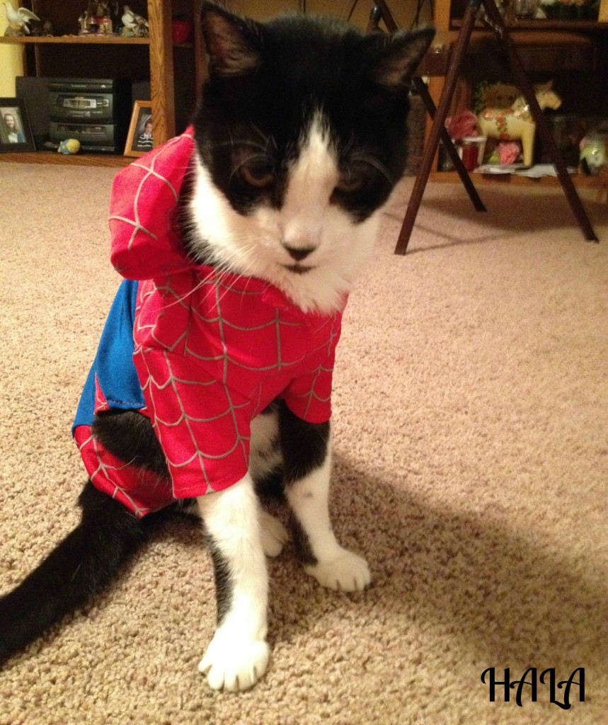 Spider Kitty Moe