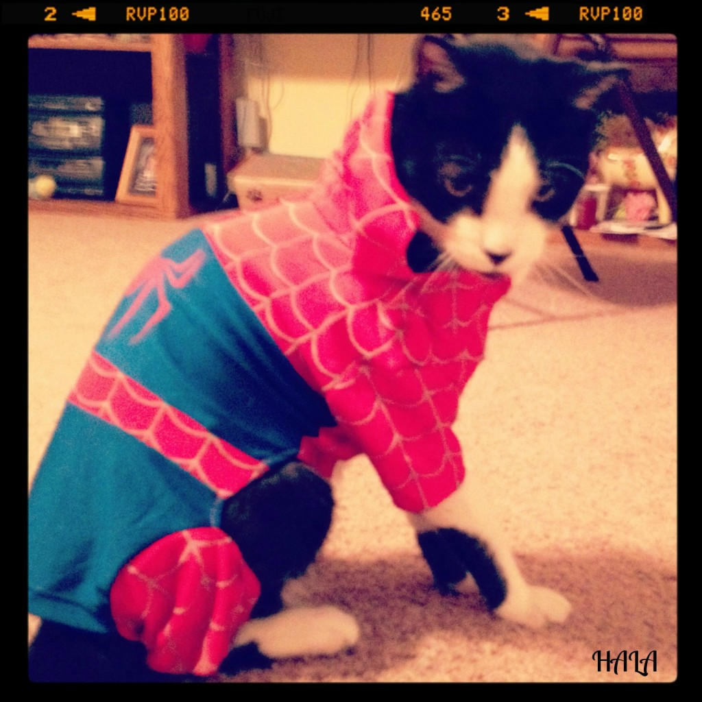 Spider Man Cat