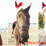 Merry Christmas from Horsing Around In LA