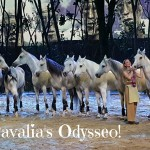 Cavalia's Odysseo Captivates Audiences in Orange County| @Cavalia #OdysseoOC