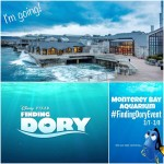Swim Along With Me to the Finding Dory Event in Monterey Bay! | #FindingDoryEvent