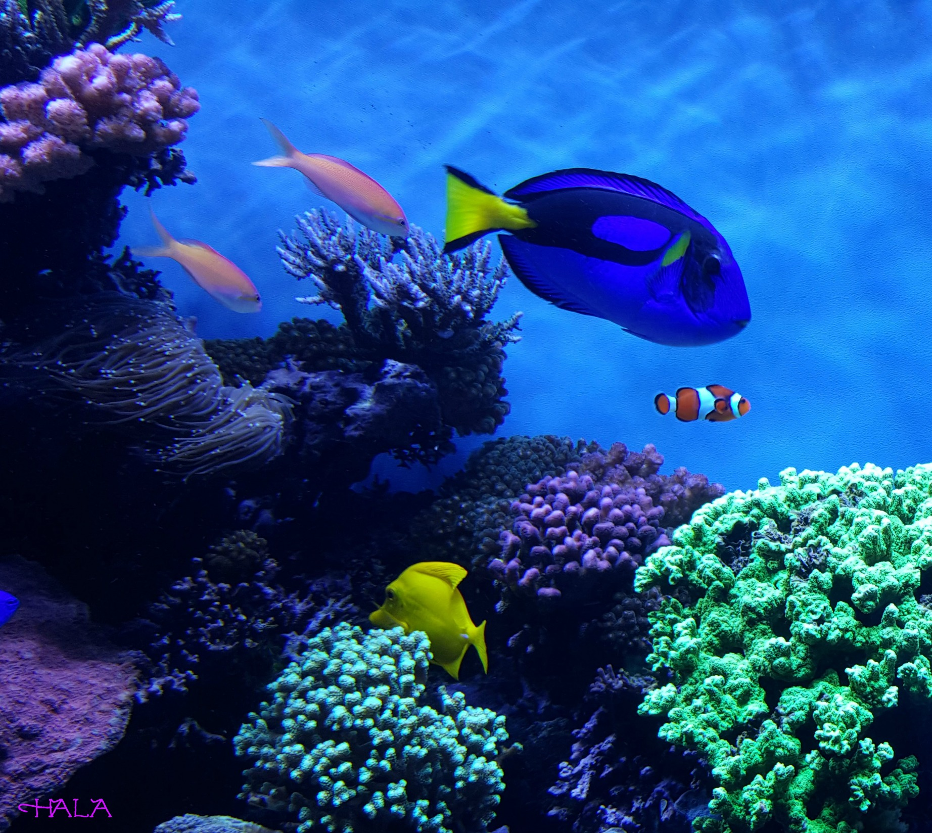 Finding dory at the monterey bay aquarium for Finding dory fish tank