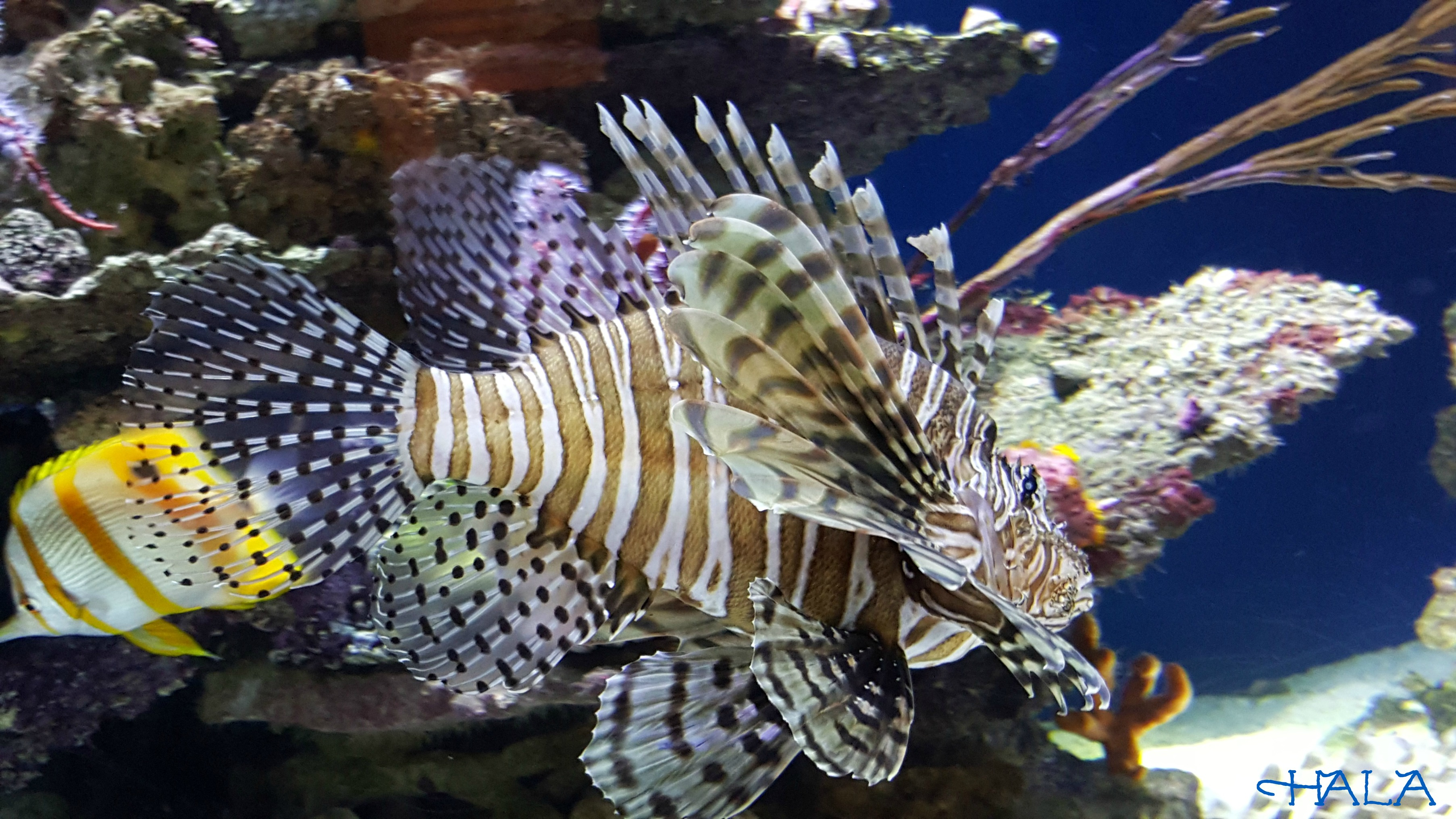 Lion-Fish-Splash-Zone