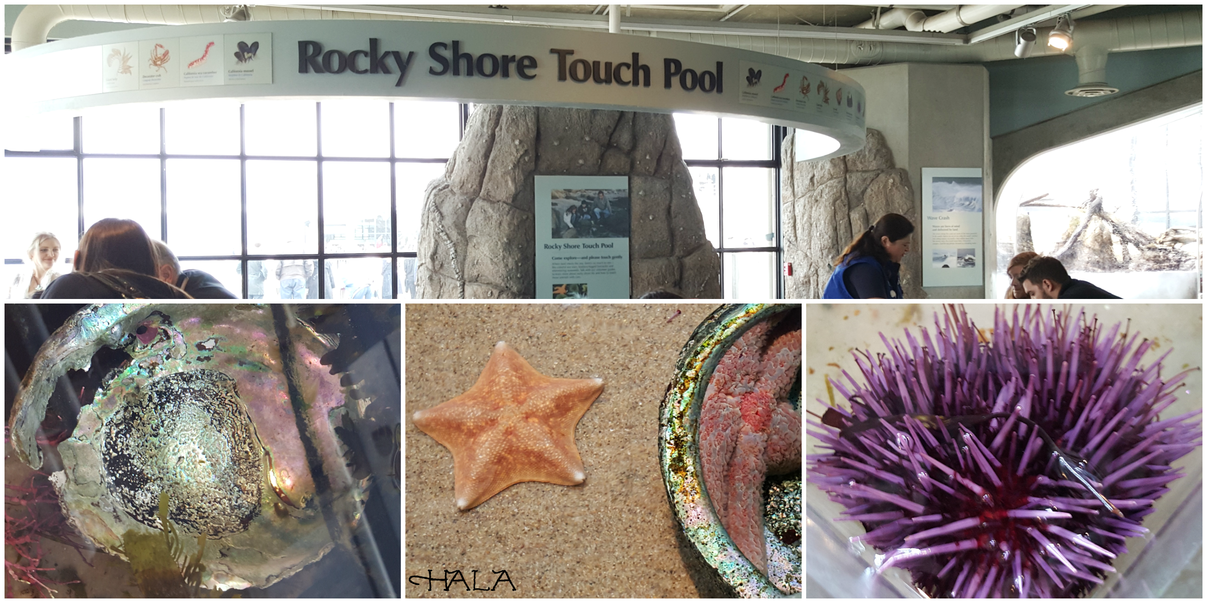 Rocky Shore Touch Pool