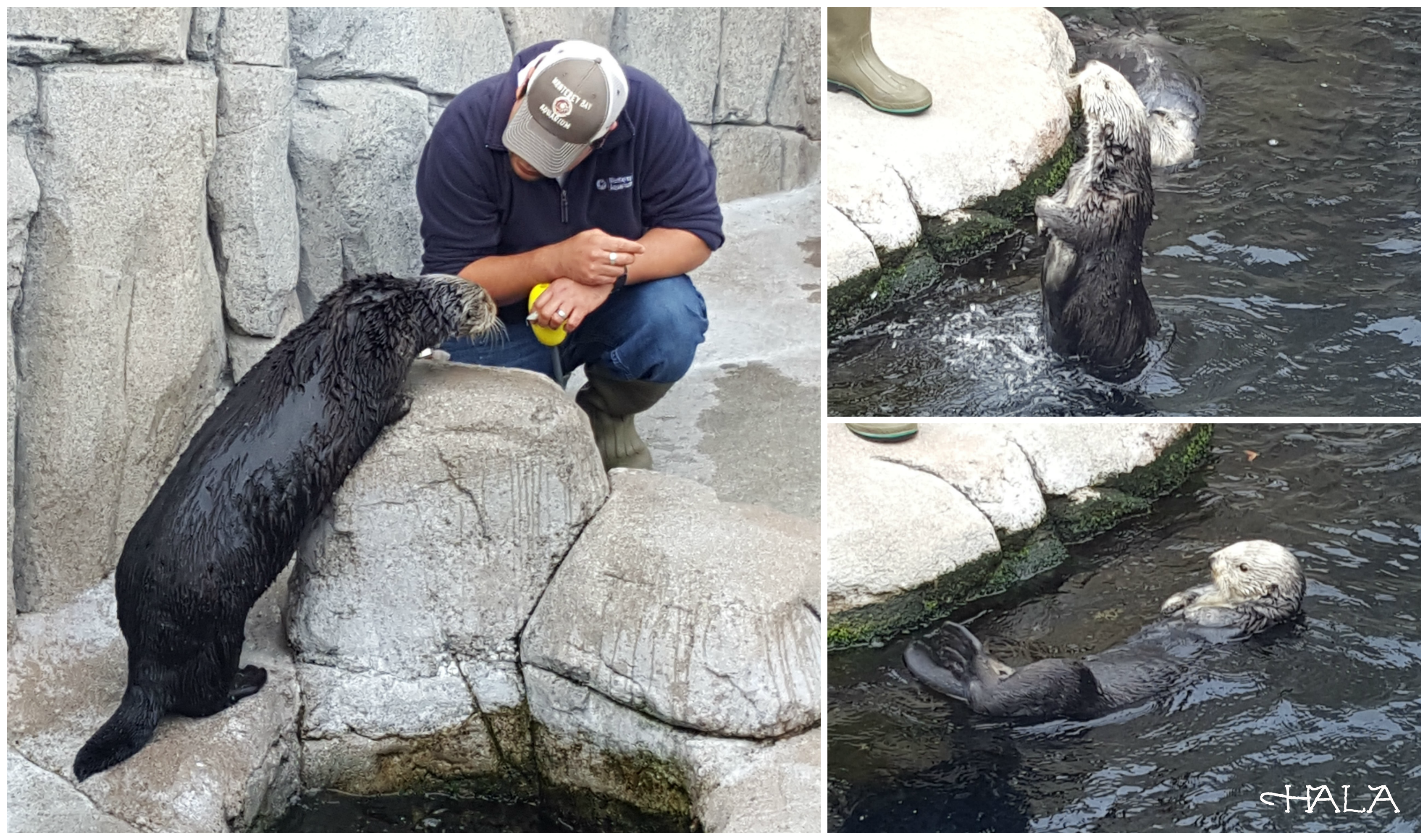 Sea Otters-Finding-Dory-Monterey-Bay-Aquarium