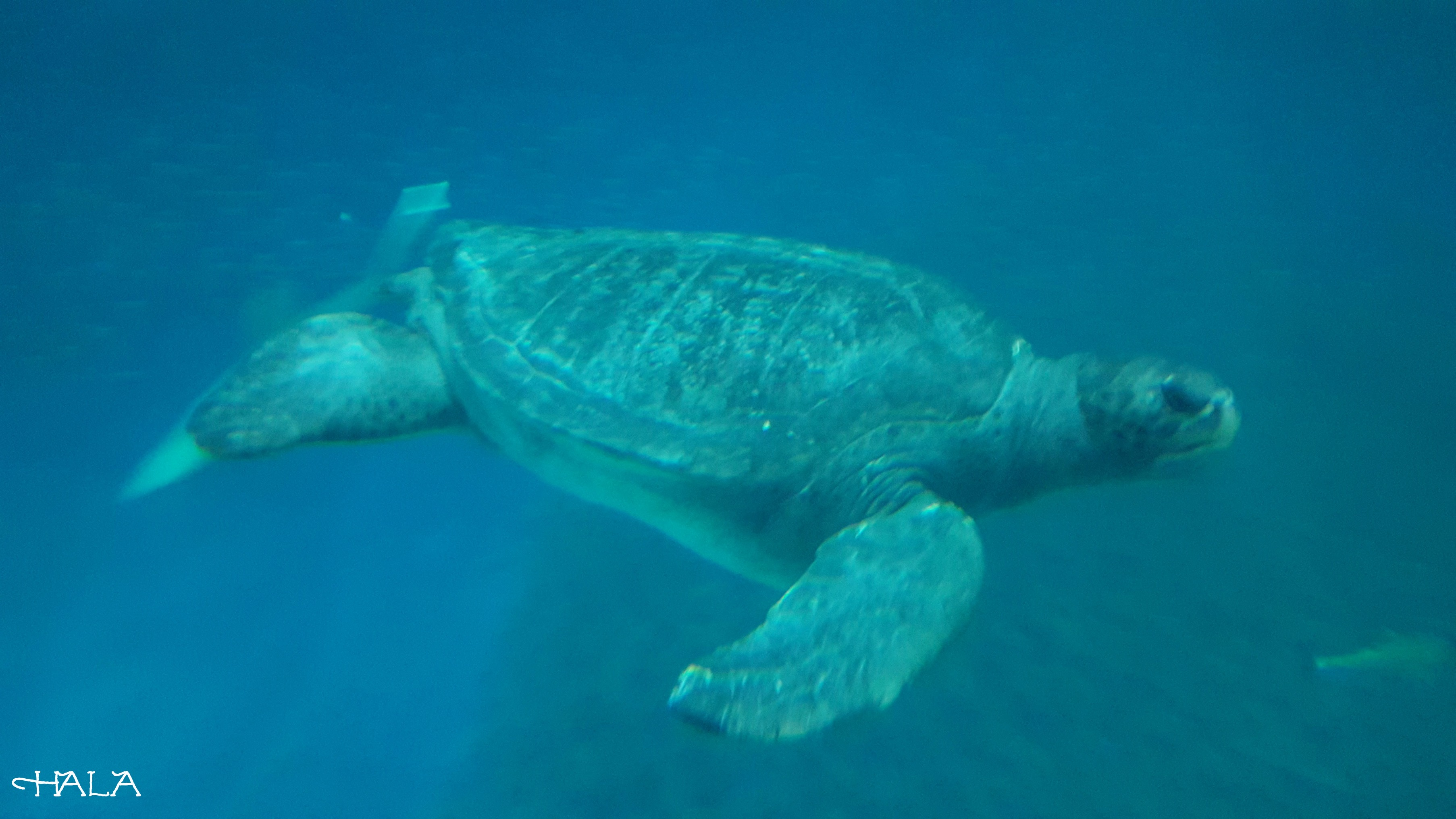 Sea-Turtle-Aquarium