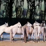 Odysseo by Cavalia is Back in Orange County!