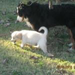 Wordless Wednesday– Puppy Love <3