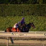 A Day at the Races: The Breeders' Cup Classic 2014