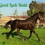 Good-Luck Redd